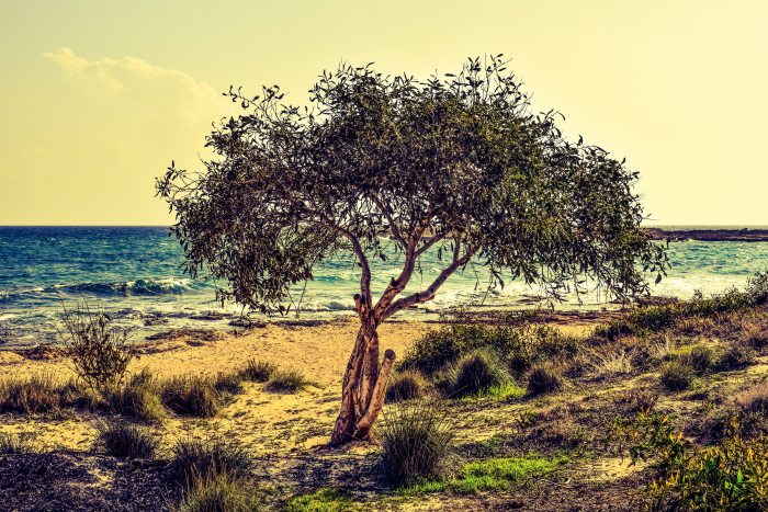 beach-beautiful-grass-358418 (1)